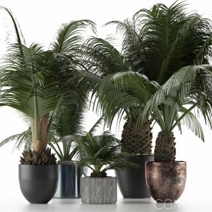 Plants Collection 16