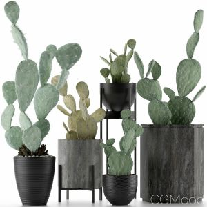 Plants Collection 17
