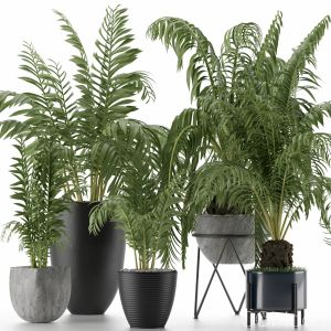Plants Collection 18