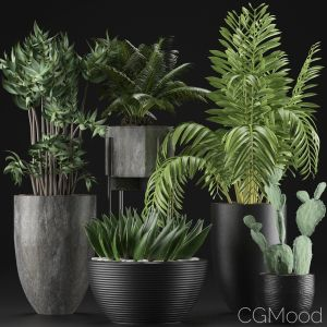Plants Collection 19