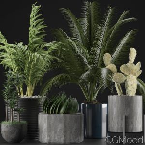 Plants Collection 20
