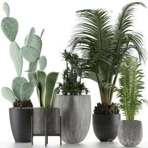 Plants Collection 21