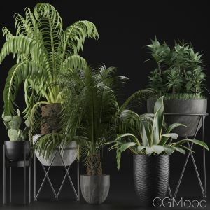 Plants Collection 22