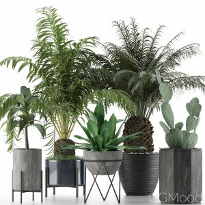 Plants Collection 23