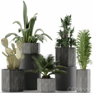 Plants Collection 26