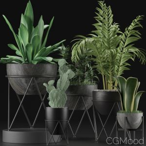 Plants Collection 27
