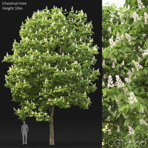 Chestnut-tree (10m)
