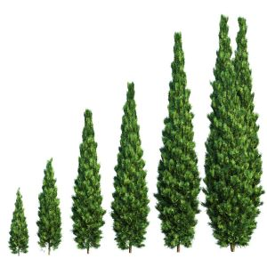 Thuja. Set Of 6 Models