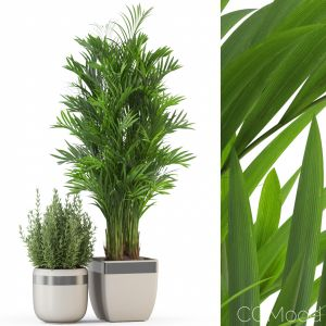 Plants Collection 320
