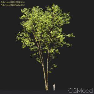 Ash-tree #0102(23m)
