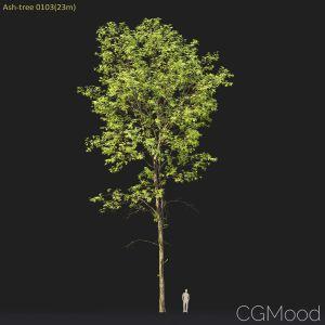 Ash-tree #0103(23m)