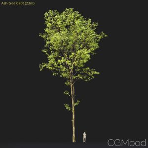 Ash-tree #0201 (23m)