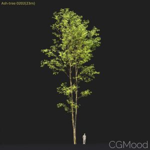 Ash-tree #0202(23m)