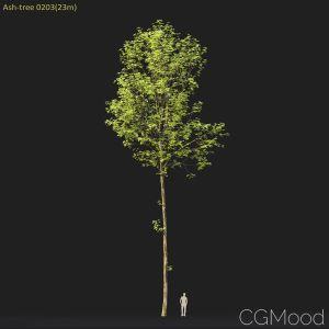 Ash-tree #0203(23m)