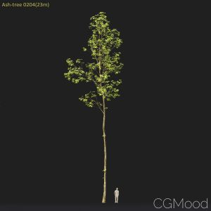 Ash-tree #0204(23m)