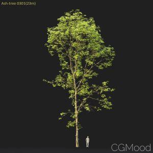 Ash-tree #0301(23m)