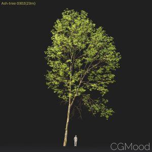 Ash-tree #0302(23m)