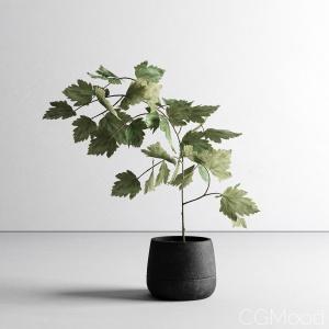 Scandinavian Plant