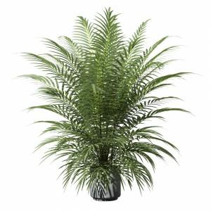 Palm Tree In Concrete Pot