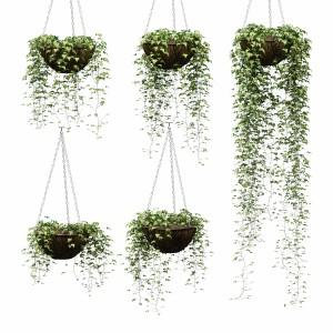 Hanging Ivy In Pots - 5 Models