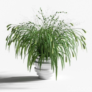Bouquet Of Grass With Knobs