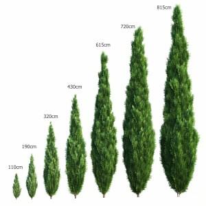 Thuya Tree Set - 7 Models