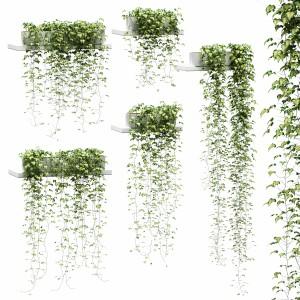 Hanging Ivy In Pots On The Shelves V2