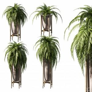 Fern In Pots. 4 Models
