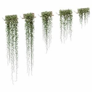 Hanging Plants For Shelves Vinca Major - 5 Models