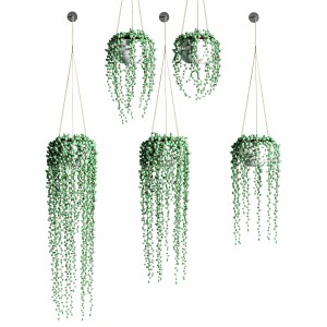Hanging Succulents In Hanging Flower Pots. 5 Model
