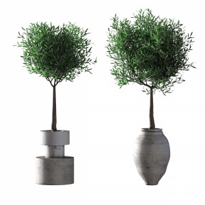 Olive Trees. 2 Models