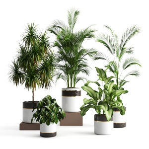 Plants Collection 188