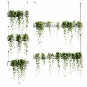 Ivy In Hanging Flower Pots. 5 Models