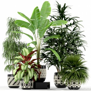 Plants Collection 189