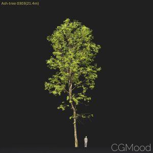 Ash-tree #0303(21.4m)