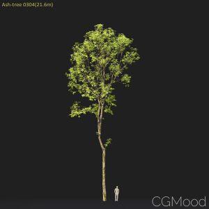 Ash-tree #0304(21.6m)