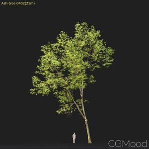 Ash-tree #0402(21m)