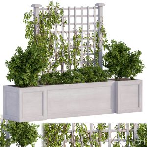 Outdoor Plants With Ivy And Fence White