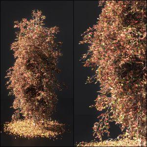 Autumn Tree001