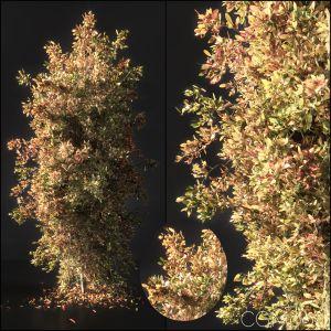 Autumn Tree002