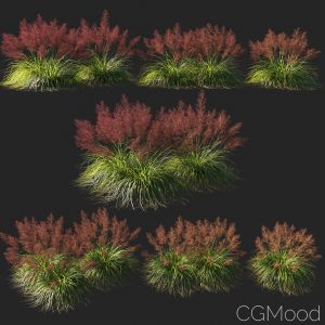 Muhly Grass 01