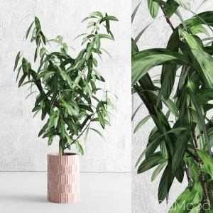 Decorative plant 13