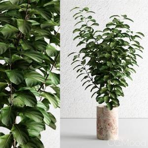 Decorative plant 12