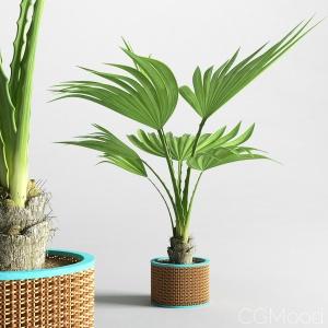 Home palm plant