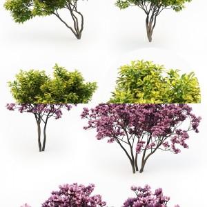 Magnolia Collection Vol 1