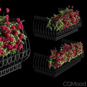 Facade Geranium Plant