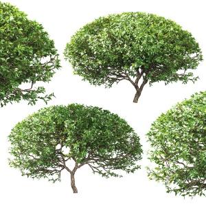 Spherical Bushes. 2 Models