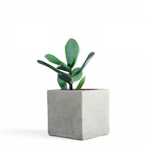 3d Scanned - Concrete Pot + Succulent