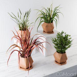 Plants And Pot Decor
