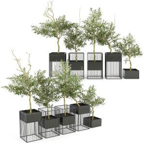 Kehlani Plant Stand Olea